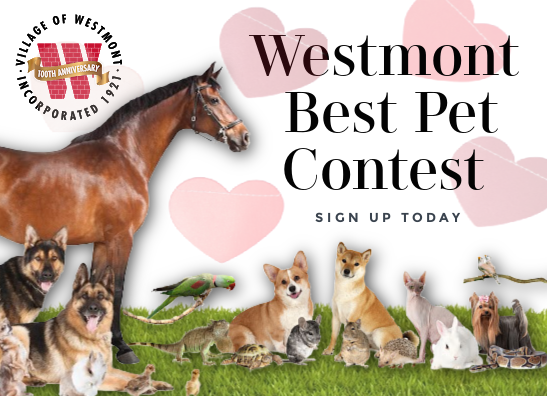 Best Pet Contest